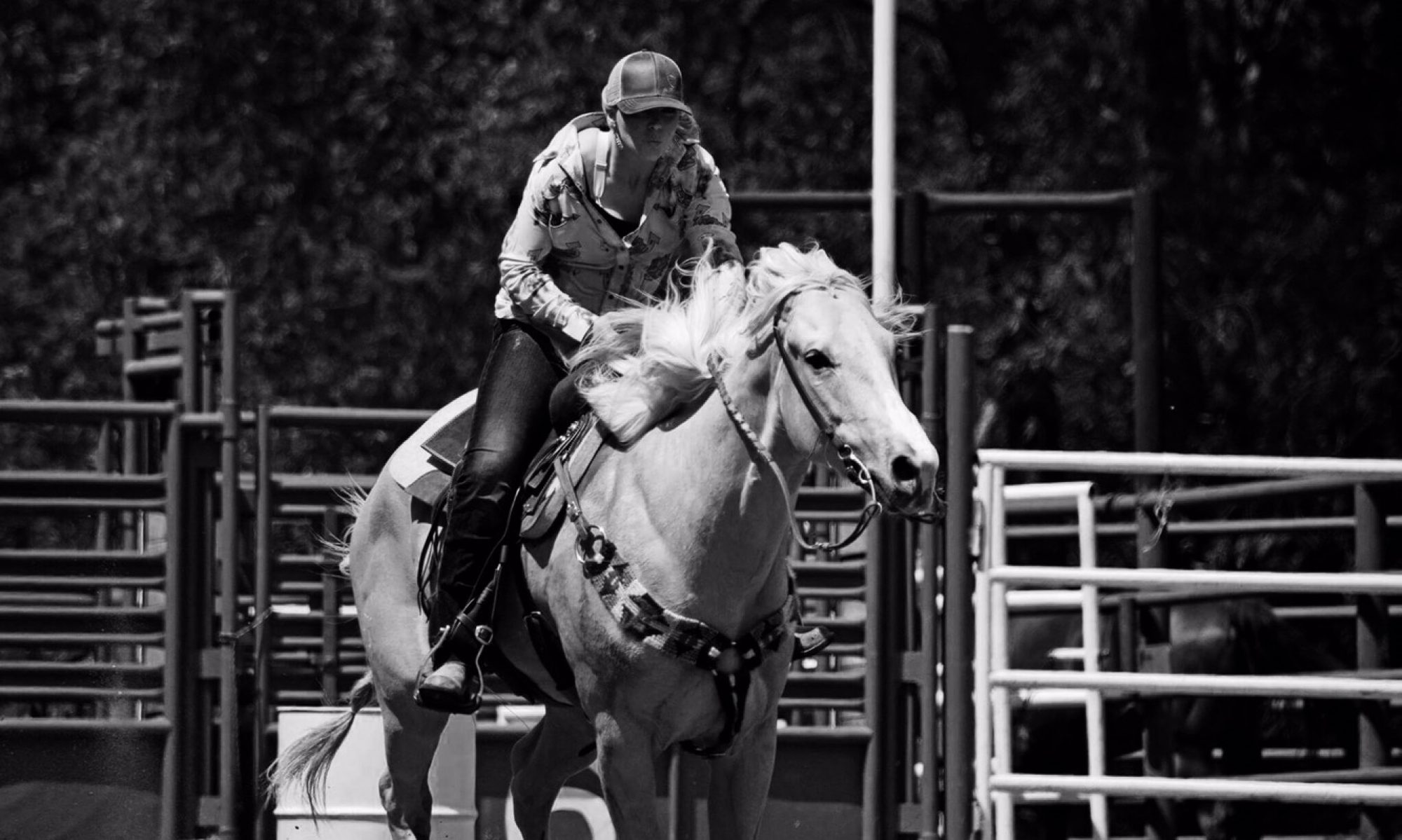Emily Gernaat Performance Horses LLC